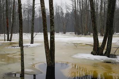 Roztopy w olszynie Puszcza Białowieska, Nadleśnictwo Hajnówka ©Mateusz Matysiak