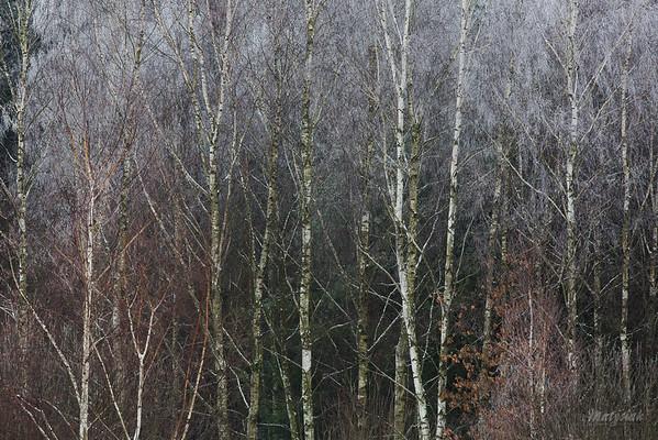 Zimowe barwy