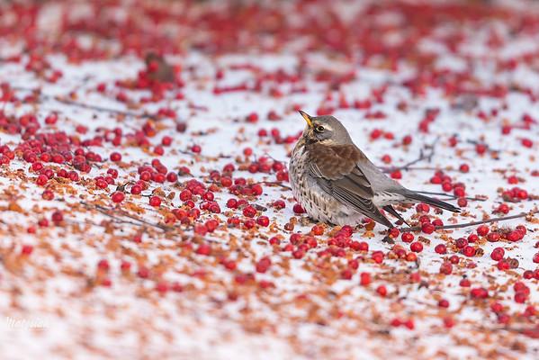 Na czerwonym dywanie