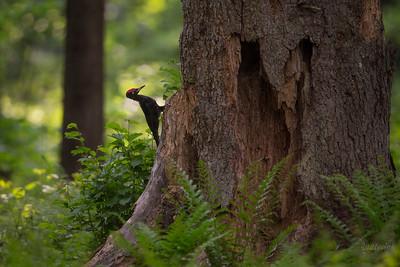 W starym lesie