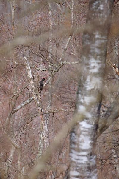 Kolejarz w lesie