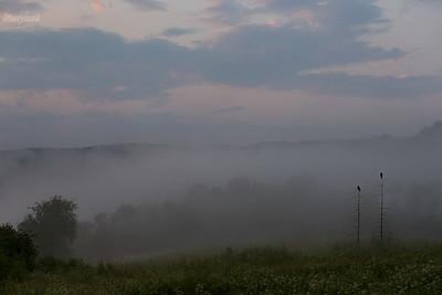 Strażnicy mgieł