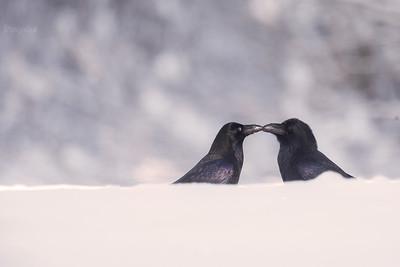 Zimna miłość