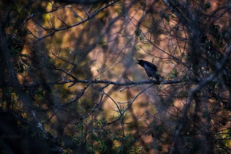 W plątaninie jesiennych przepowiedni