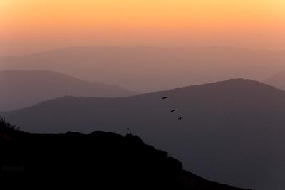 Kruki (Corvus corax) w trakcie akrobatycznych zabaw na wietrze Bieszczady ©Mateusz Matysiak
