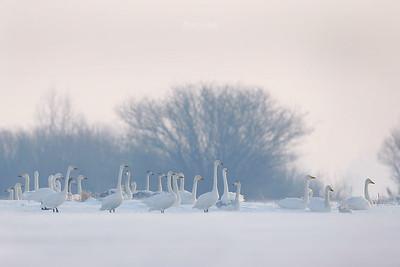 Na zimowisku