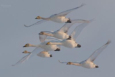 Eskadra krzykliwców