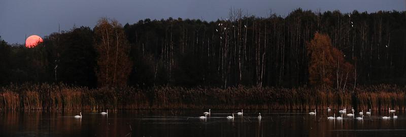 Jesienny wschód księżyca nad Gągoliną