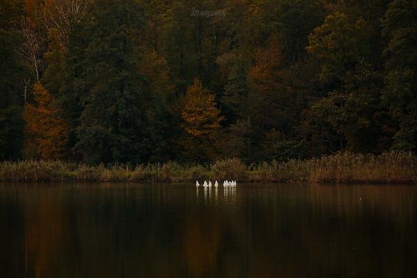 10 bałwanków w jednym stało lesie
