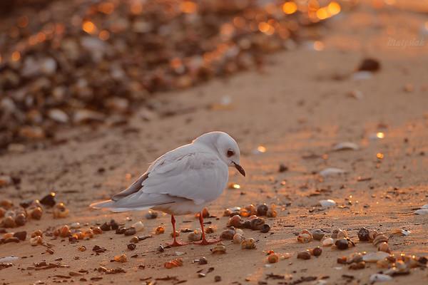 Na bursztynowej plaży