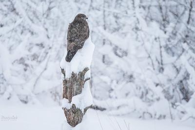 Na śnieżnej czapie