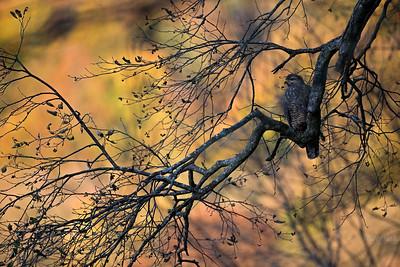 W leśnym siodle