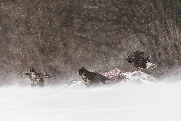 Zimowa pokora