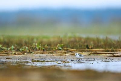 Siemianowski piaskowiec