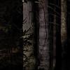 W nocnym borze