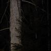 Leśny duszek