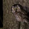 Nocny wypatrywacz