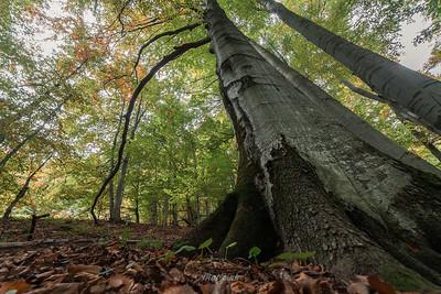 Jesienna buczyna Stoły, Bieszczady ©Mateusz Matysiak