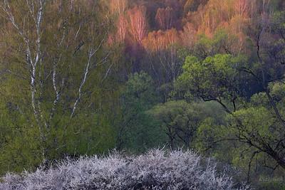 Bukiet kwietniowego lasu