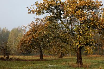 Jesieni czar