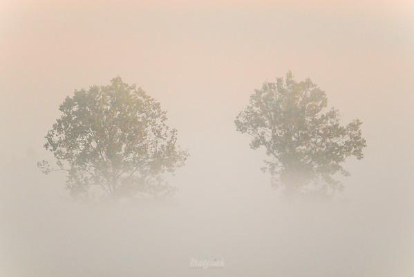 Poranek z drzewami