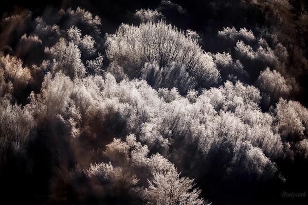 Szadź na leśnych zaroślach podczas bardzo mroźnego poranka Bieszczady ©Mateusz Matysiak