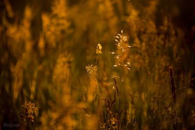 Płomienna łąka