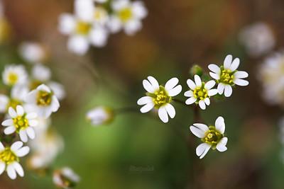 Rośliny zielne / Herbaceous Plants