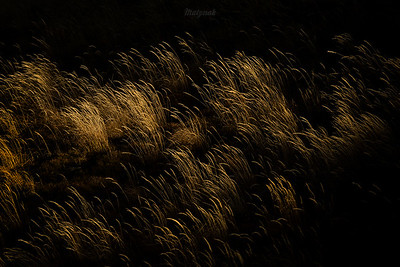 Trawy Połonin