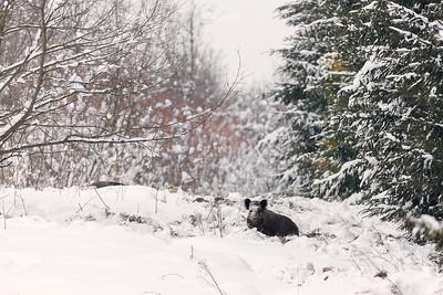 Na śniegowym buchtowisku