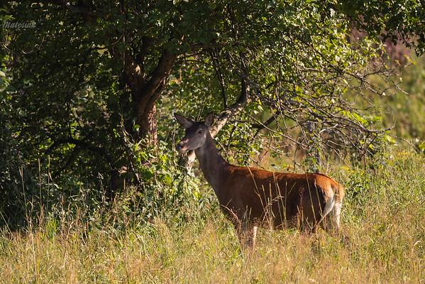 Lato pod jabłonią