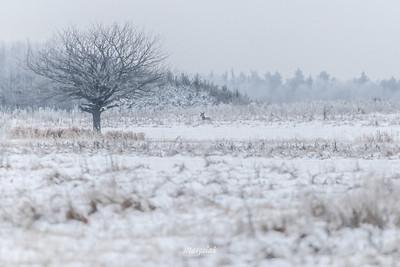 Zimowe malowidło puszczańskiego przedpola