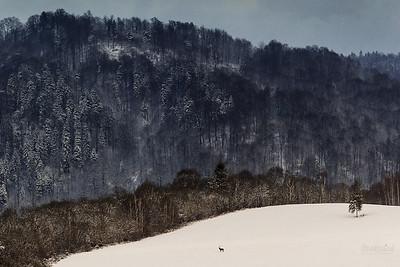 Zimowy pielgrzym