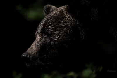 Brunatna latarnia w zielonościach czarnego lasu