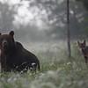 Kudłaty i Przechera - bieszczadzka spółka z bardzo ograniczoną odpowiedzialnością