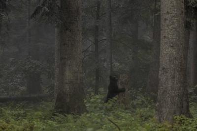 Nauka tańca w słotnym lesie