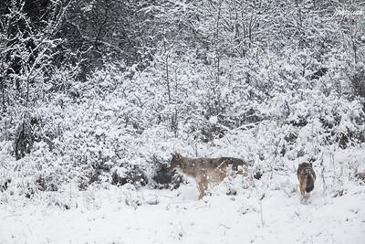 Para w zimowych tarninach