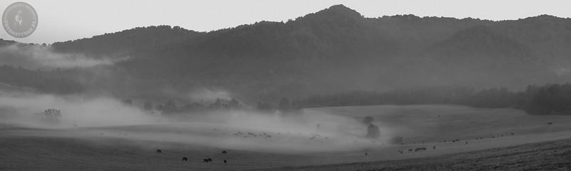 Rekordowe stado 129 żubrów (Bison bonasus) na popasie o świcie. Kolaż 3 fotografii z setką widocznym osobników. Bieszczady ©Mateusz Matysiak