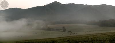 Rekordowe stado 129 żubrów (Bison bonasus) na popasie o świcie. Kolaż 2 fotografii z ok. 85 os. Bieszczady ©Mateusz Matysiak