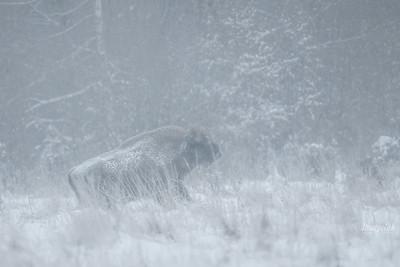 Galopująca śnieżyca