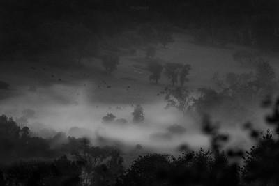 W dolinie mglistego żubrowiska I