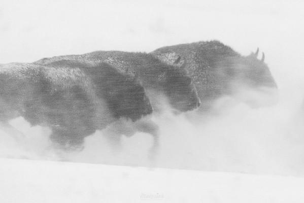Atak zimy olbrzymów