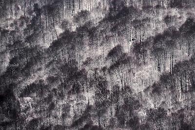 Samotnik w górach