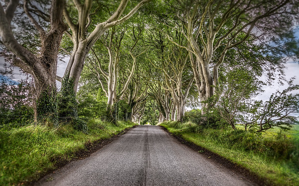 """The Dark Hedges"""