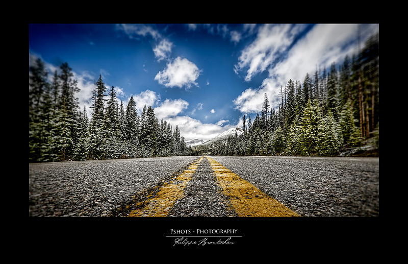 Road View - Special Collection