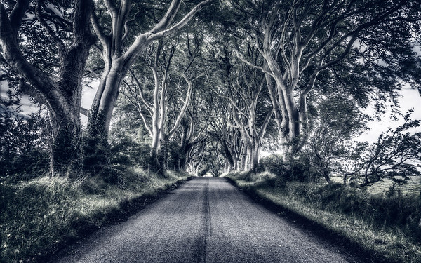 Dark Hedges - Mystic View
