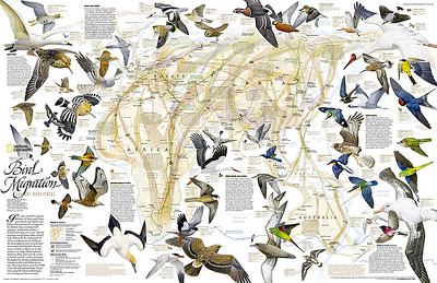 Old World Birds qk