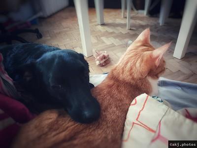Jak pies z kotem (Tupek i Słomek)