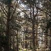 Estero Trail