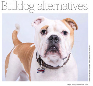 Dogs Today Magazine December 2016